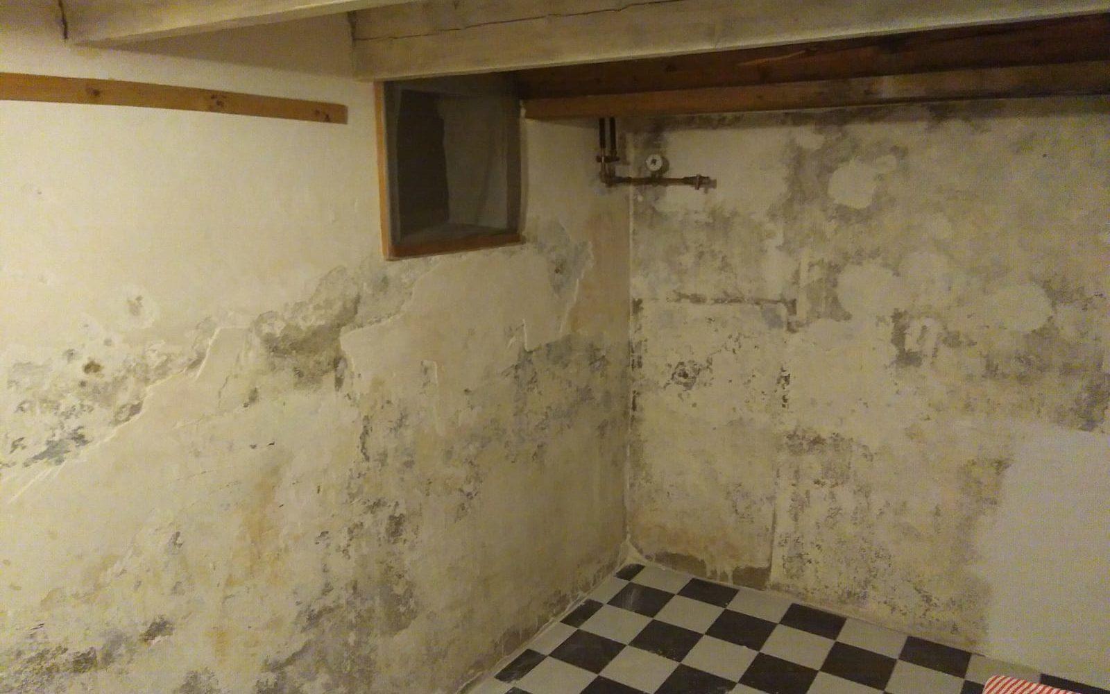 rwp100_basement-haarlem